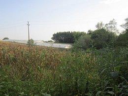 Licitaţie teren agricol, în Curcubeu