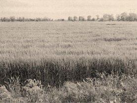 Licitaţie teren agricol, în Braila, zona Vest