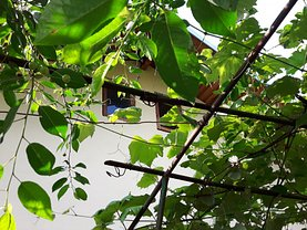 Casa 4 camere în Ploiesti, Marasesti