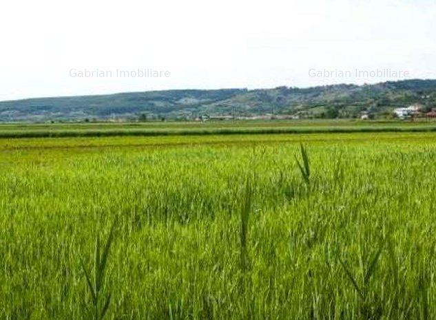 Vand 610 ha teren arabil, Arad,Ucuris,  sol cal 3 si 4 - imaginea 1