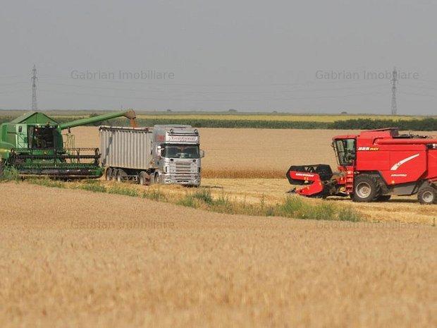 Vand  100 ha teren arabil in  Arad,Misca, sol cal 1 si 2.  - imaginea 1