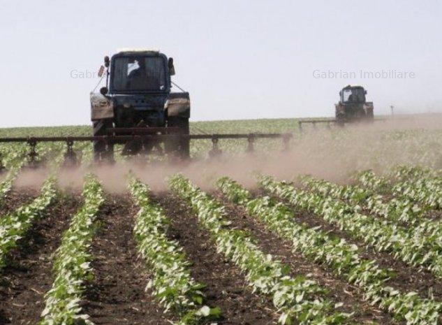 Vand urgent 10 ha teren arabil la 10 km de Chisinau Cris. Dau in arenda - imaginea 1