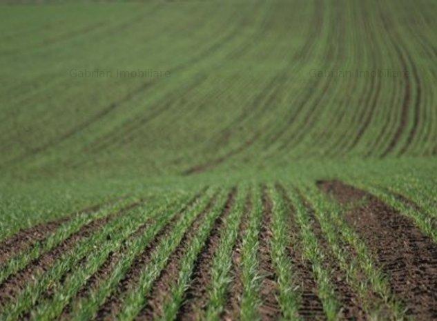 Vând teren arabil ,Bihor , Tinca,120 ha la CF - imaginea 1