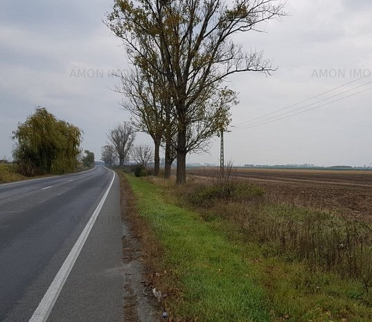 Teren de 3 hectare, la drumul european Arad-Pecica - imaginea 1
