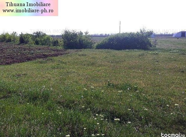 TIHUANA IMOBILIARE:vanzare teren Potigrafu - imaginea 1