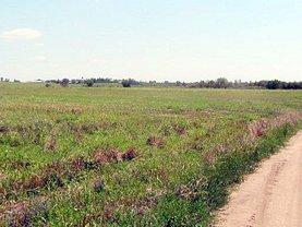 Licitaţie teren agricol, în Chirculesti