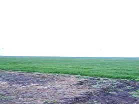 Teren agricol de vânzare în Belciugatele