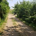 Teren agricol de vânzare, în Negru Vodă