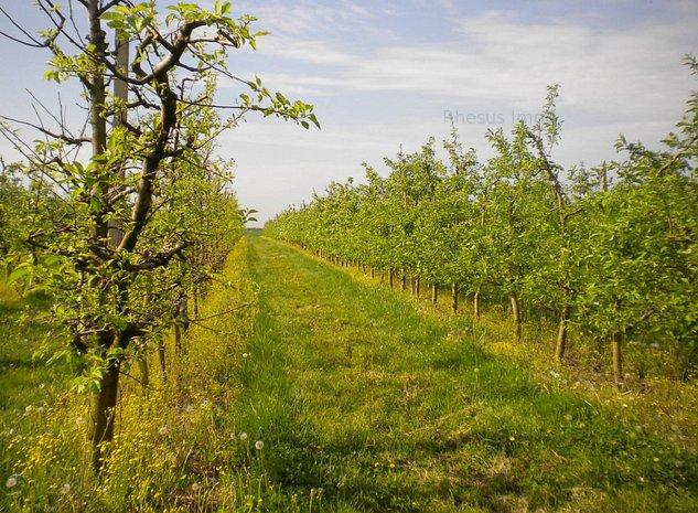 livada pe rod de pomi fructiferi - imaginea 1