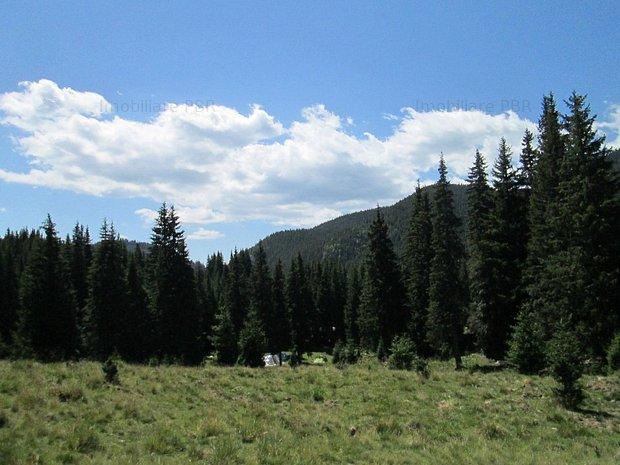Teren 6640 mp in Moroeni, Dambovita  - imaginea 1