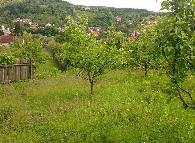 Teren extravilan 7500 mp -  Strada Liviu Rebreanu, Valea Mare, Arges - imaginea 1