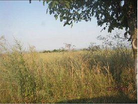 Licitaţie teren agricol, în Brăila, zona Vest