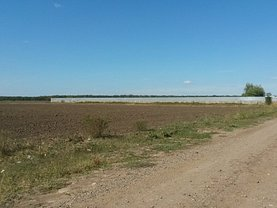 Licitaţie teren agricol, în Branesti