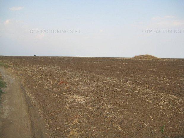 3 parcele teren, 14495 mp, Schitu - imaginea 1