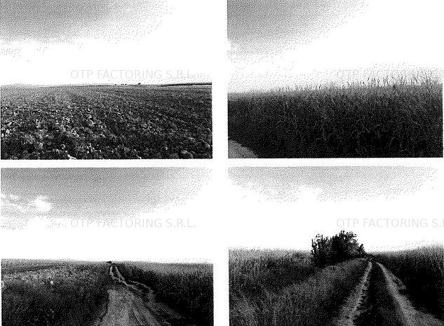 OFR 105 Teren arabil 4.600 mp Sicula Licitatie - imaginea 1
