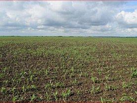 Teren agricol de vânzare, în Lugoj, zona Periferie