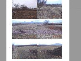 Licitaţie teren agricol, în Sieu-Magherus