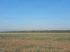 Licitaţie teren agricol, în Tânganu