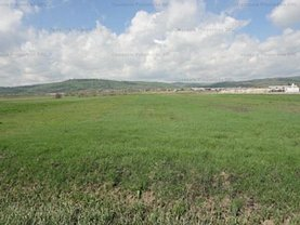 Licitaţie teren agricol, în Mihăeşti