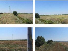 Licitaţie teren agricol, în Tartasesti