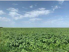 Teren agricol de vânzare în Vasilati