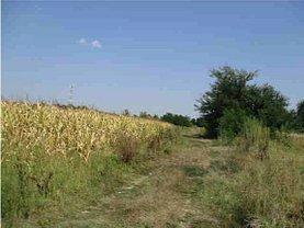 Licitaţie teren agricol, în Afumaţi