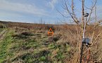 Teren Intravilan - 5.145 mp - Tomesti - imaginea 9