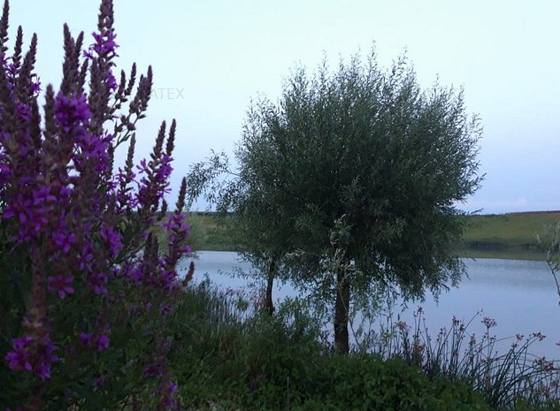 Mariuta - Belciugatele, teren cu iesire la lac - imaginea 1