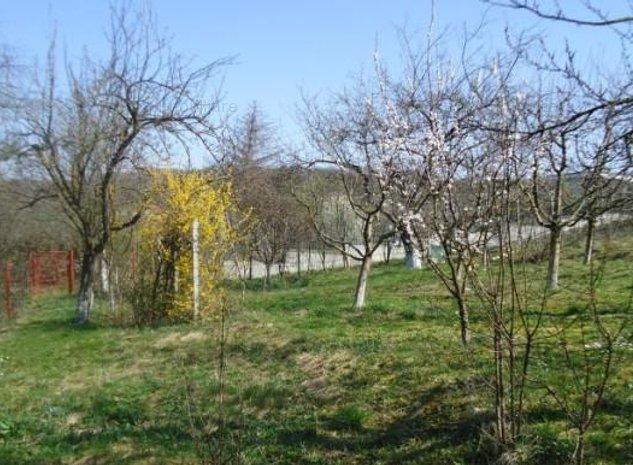 Teren de Vanzare in Zona Platoului Cornesti, oferit de Fayora Imobiliare - imaginea 1