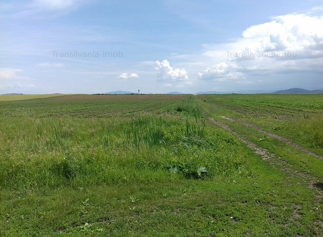De vanzare teren Brasov-Ghimbav 1,21euro/mp 14.000mp  - imaginea 1