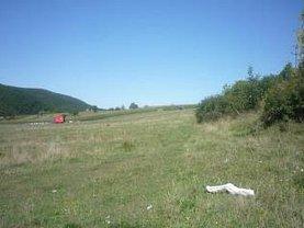 Licitaţie teren agricol, în Vascau