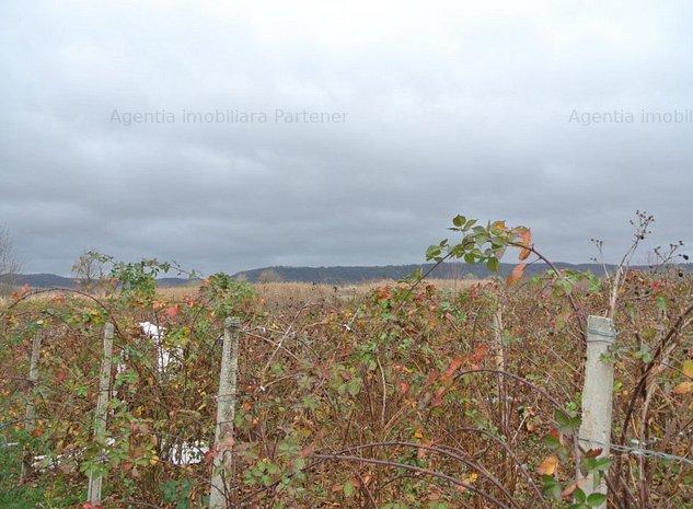 Plantatie mur Maracineni , 1.7 ha , viitorul tau business ! - imaginea 1