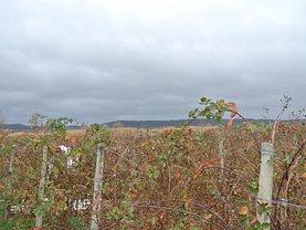 Teren agricol de vânzare, în Piteşti, zona Central