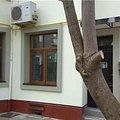 Casa de vânzare 12 camere, în Bucuresti, zona Foisorul de Foc