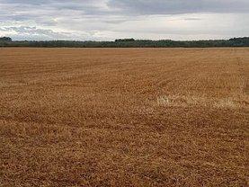 Teren agricol de vânzare, în Buftea