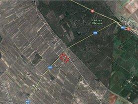 Licitaţie teren agricol, în Sabareni