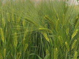 Teren agricol de vânzare, în Aureşti
