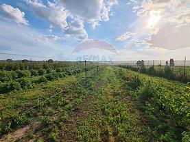 Teren agricol de vânzare, în Săuceşti