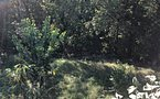 Teren de vanzare in Copou - imaginea 4