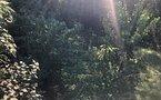 Teren de vanzare in Copou - imaginea 5