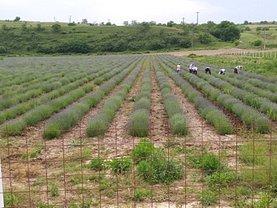 Teren agricol de vânzare în Racaciuni