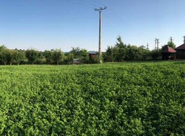 Proprietar, Vând teren intravilan 1.419 mp, zona Delea (ISU) - imaginea 1