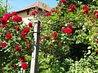 Vând imobil ( casă şi grădină ) în Râmnicu Vâlcea , zonă centrală - imaginea 8